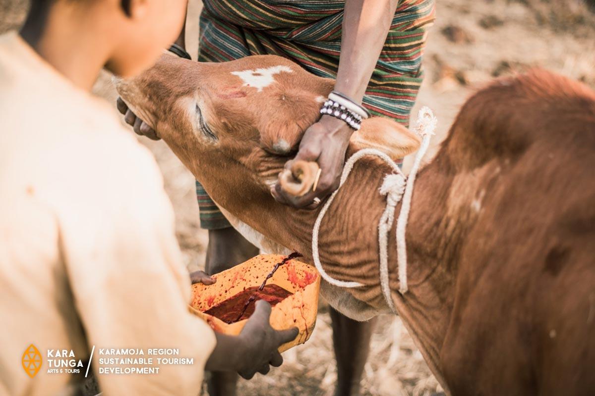 Uganda Cultural Experience with Nomadic Warriors of Karamoja