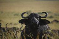 kidepo valley national park karamoja torus travel kara tunga