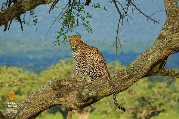 7 Days Best of Karamoja Camping Safari
