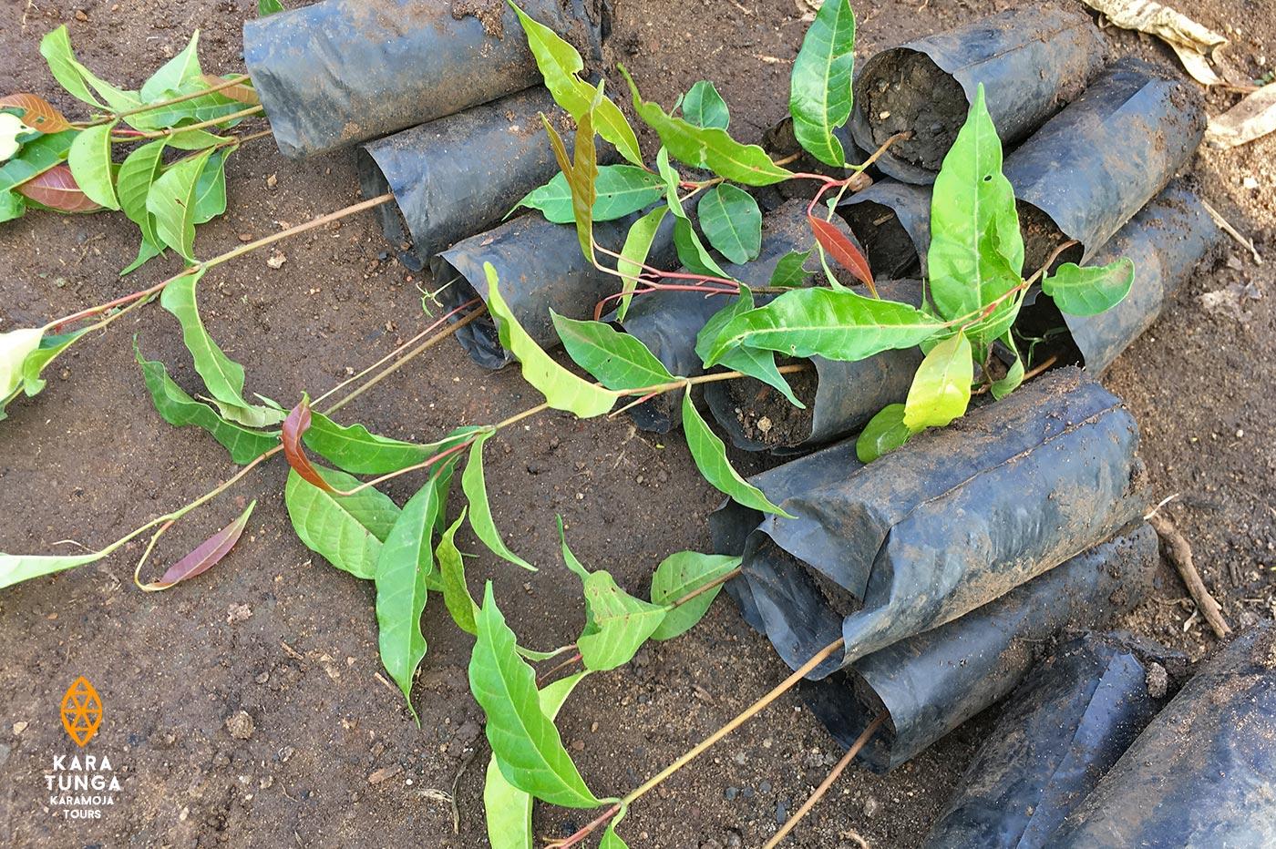 kara-tunga-tree-planting-2