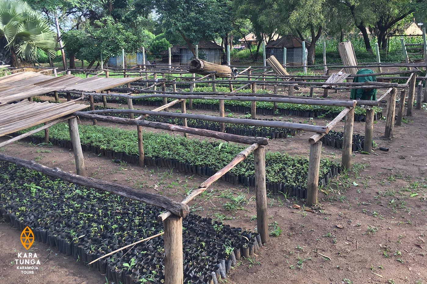 kara-tunga-tree-planting-3