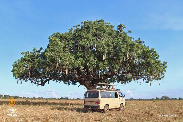 Karamoja Group Safari Kidepo Valley