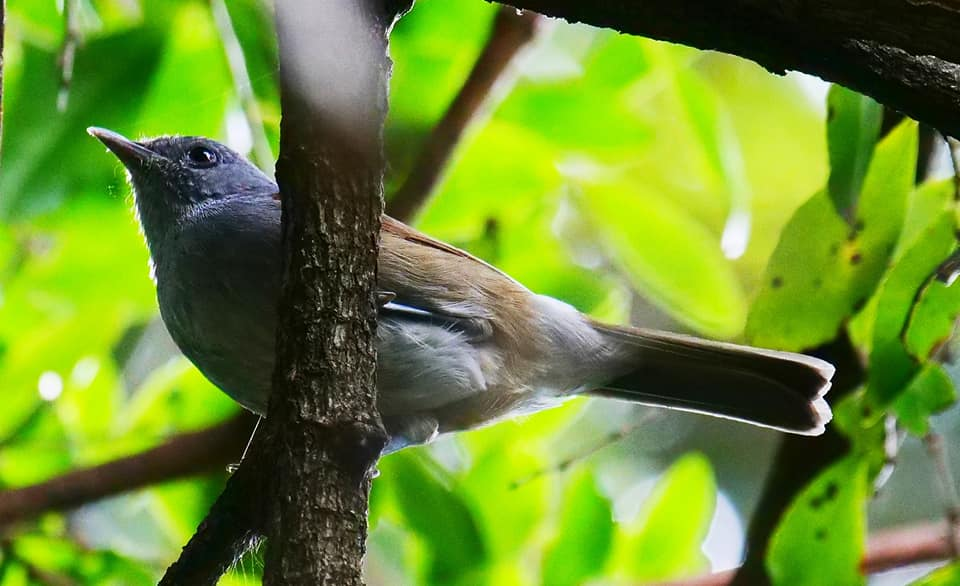 Birding on Mount Moroto Northeastern Uganda Karamoja region