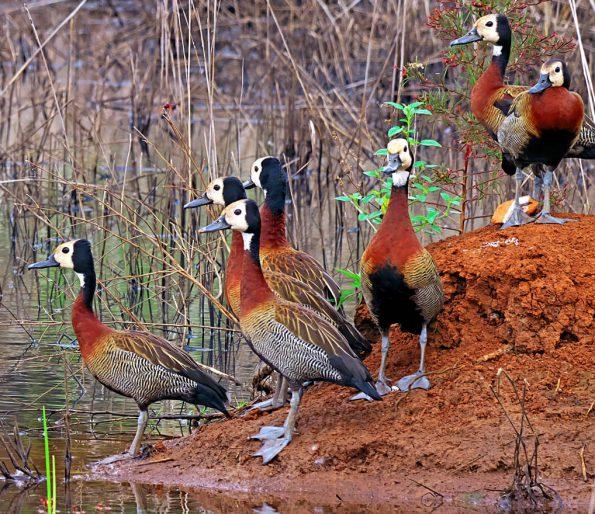 Birding in Pian Upe and Karamoja Northeastern Uganda