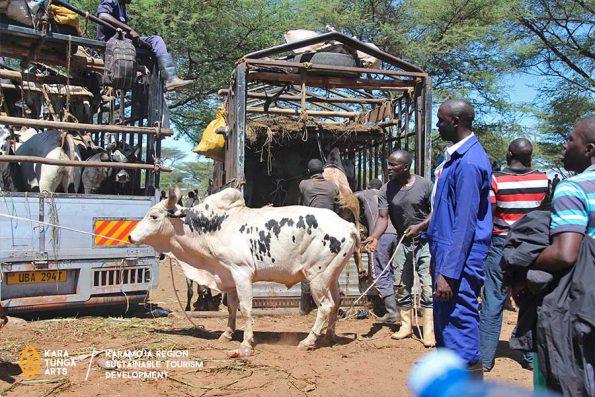 kara-tunga-karamoja-uganda-cattle-market-visit-cultural-tour-9